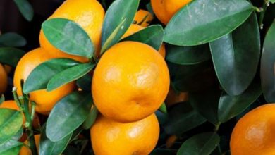 فوائد البرتقال للقلب