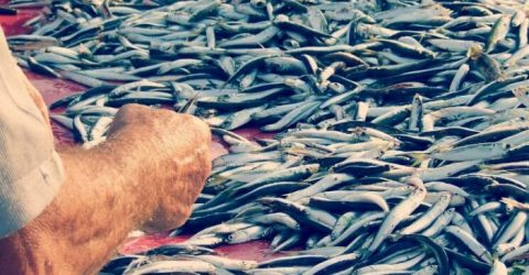 Photo of أخبار سيئة عن أخر التطورات البيئية البحرية