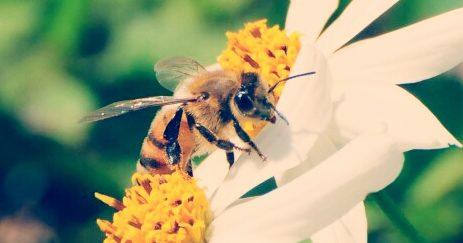 Photo of العسل – النحل يوفر بديلا هاماً للمضادات الحيوية