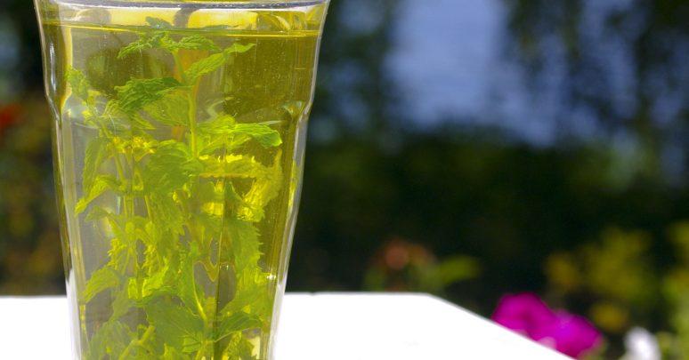 Photo of فوائد الشاي الأخضر للعظم – الشاي الأخضر يزيد من كثافة العظام