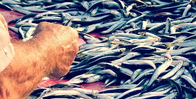 Photo of ٤٠ نوع من الأسماك مهددة بالإنقراض في البحر الأبيض المتوسط
