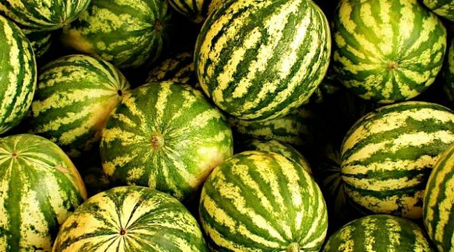 Photo of دراسة تكشف فوائد صحية جديدة في الجبس و البطيخ – فوائد البطيخ