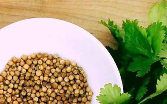 Photo of فوائد الكزبرة – توابل شهية ومضادات حيوية هامة