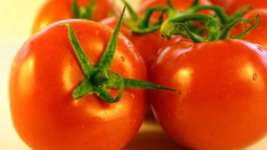 Photo of فوائد الطماطم لمرضى السكر – البندورة مفيدة لمرضى السكر