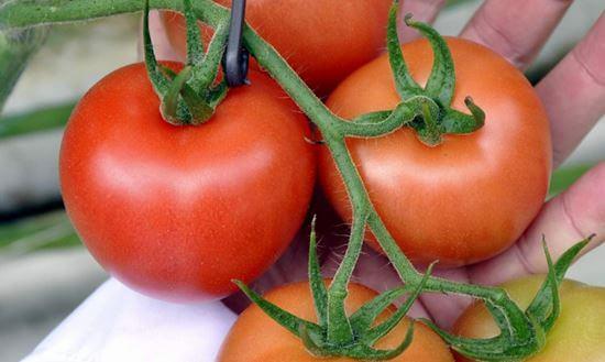 تناول الطماطم مع-قشره