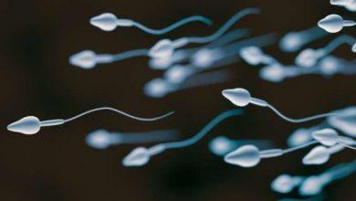 Photo of ما هو تأثير الغذاء على الحيوانات المنوية وما هو تأثير غذاء الحامل على الجنين