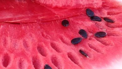 Photo of ما هي فوائد بزر الجبس – فوائد بذور البطيخ و تأثيرها على الصحة