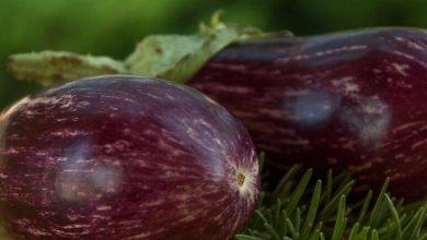 Photo of ما هي العناصر الغذائية في الباذنجان – القيمة الغذائية للباذنجان