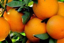 فوائد البرتقال للدماغ