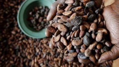 فوائد الشوكولاته ضد السعال