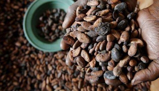 Photo of فوائد الشوكولاته ضد السعال – الشوكولاته واحدة من أفضل العلاجات المنزلية ضد السعال