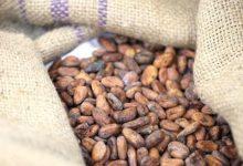 فوائد الكاكاو للقلب