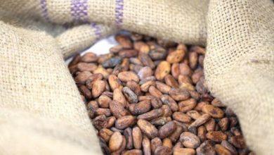 Photo of فوائد الكاكاو للقلب – خفض ضغط الدم في ٣٠ يوما مع الشوكولاته الداكنة
