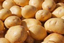 فوائد البطاطا للرياضة