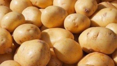 Photo of فوائد البطاطا للرياضة – تناول البطاطا يزيد من اللياقة البدنية